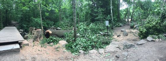 downed tree at cat rock
